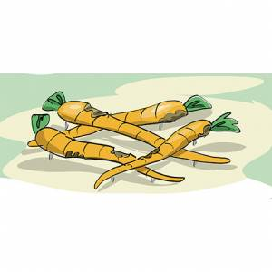 """""""Pile of Carrots 4"""" (Order-No.: 1S-160825-48)"""